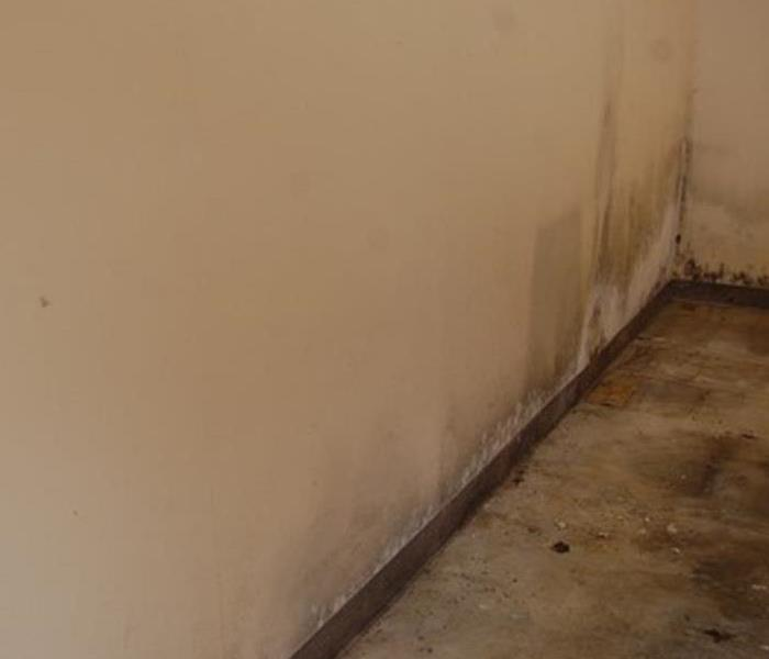 Moldy Wall Before Treatment